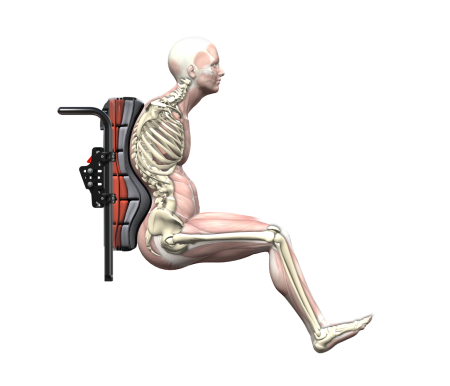 Spex SuperShape Back Support for Lordosis